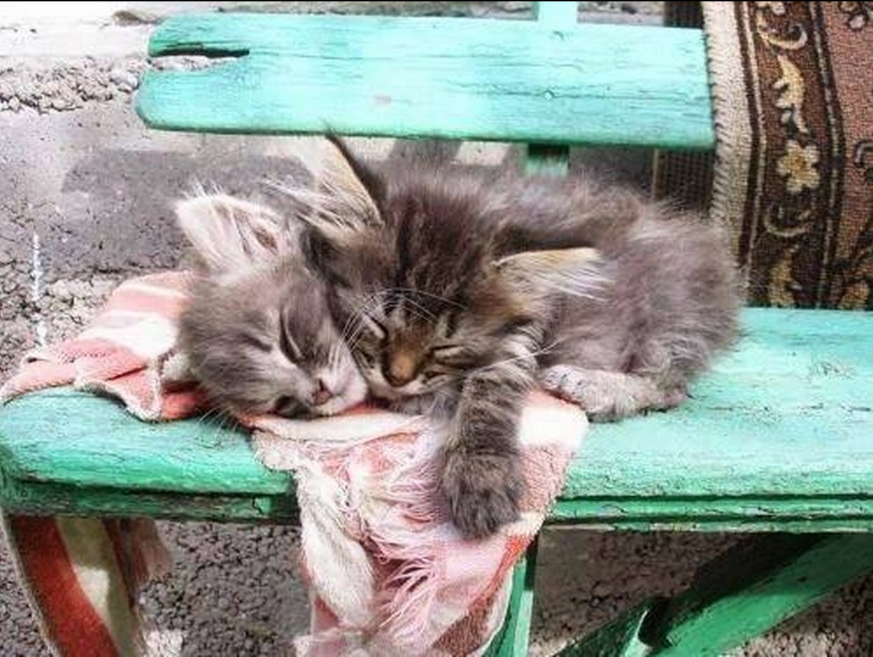 kittens on bench
