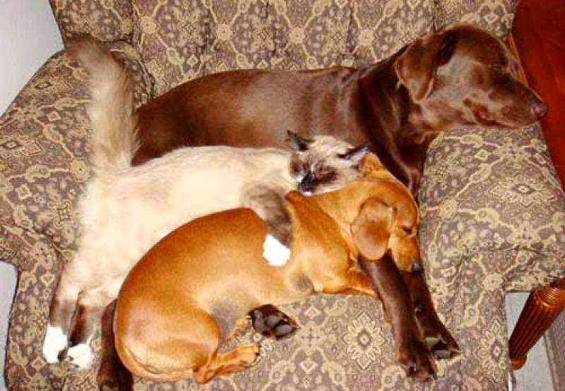 love dog 11