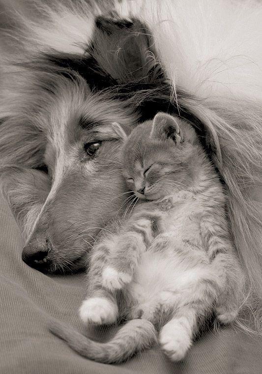 love dog 14
