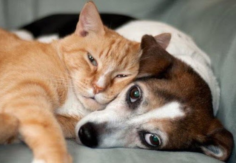 love dog 15