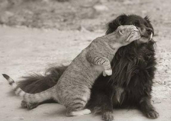 love dog 5