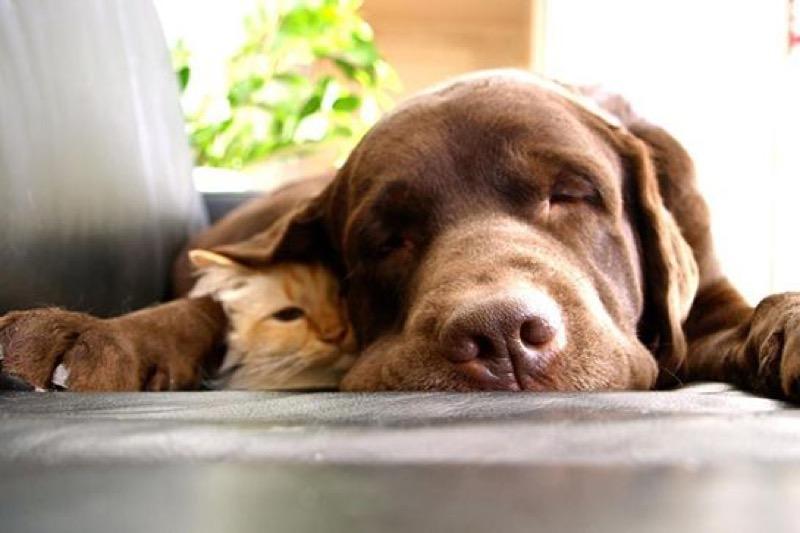 love dog 7
