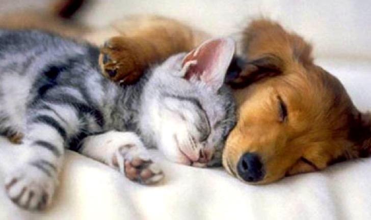 love dog 9