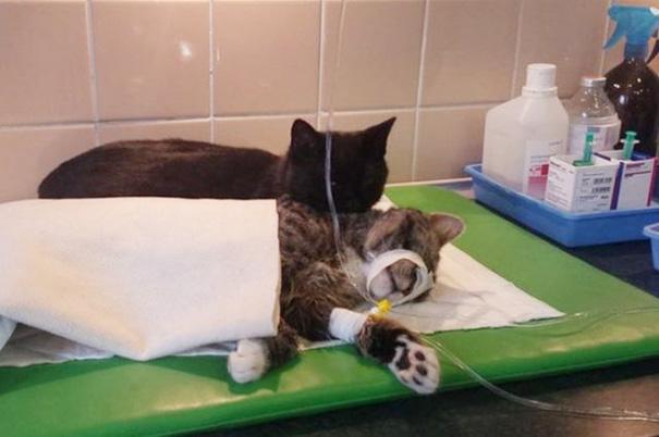 polish cat 2