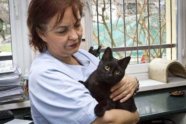 polish cat 4
