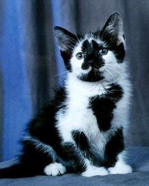 black and white cute