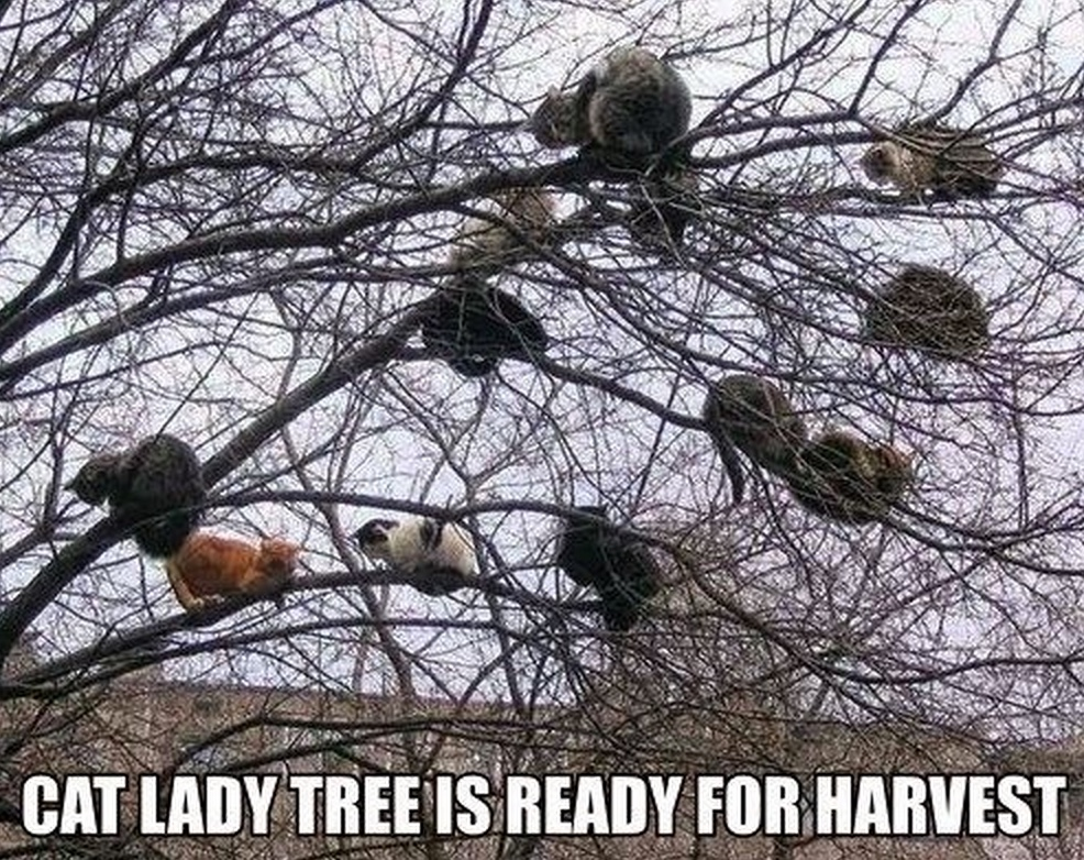 cat lady tree lol