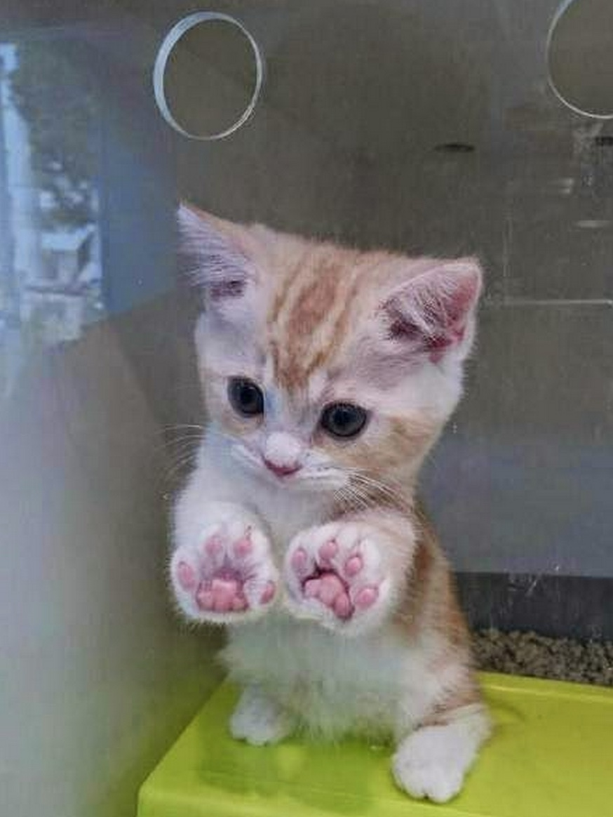 jelly toes