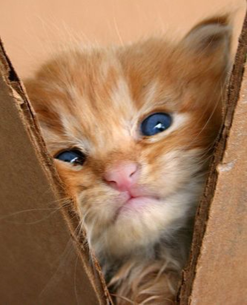 like my box