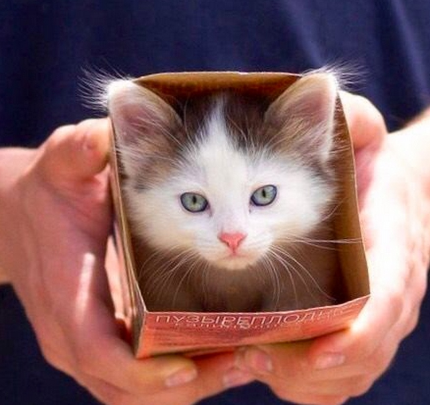 ooh look, a cat in a box