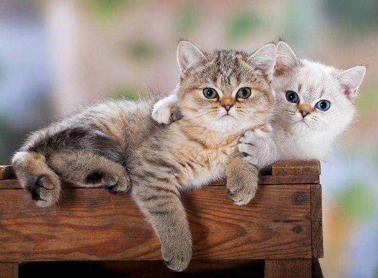 pair of cuties