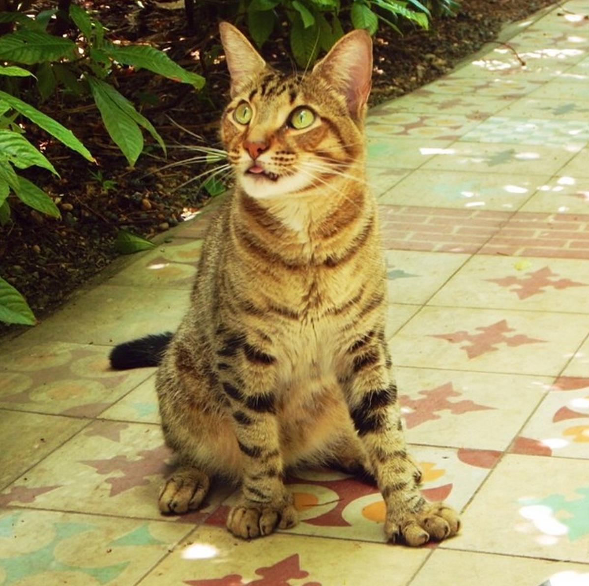 M Cat Names 18 Adorable Cats That ...