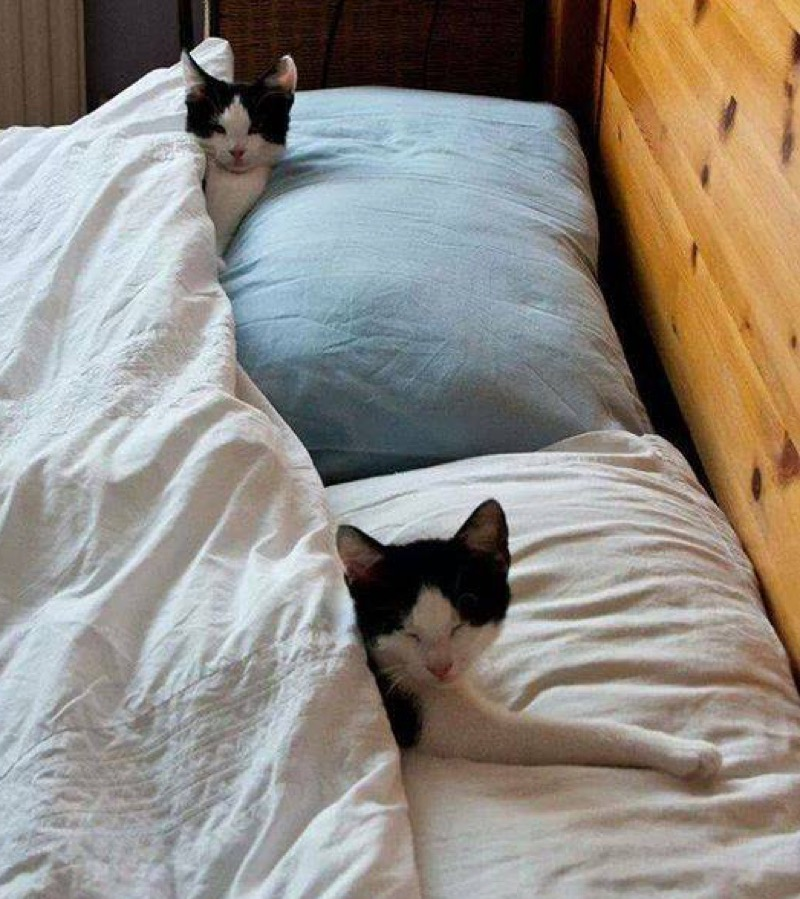 2 cats in bed copy