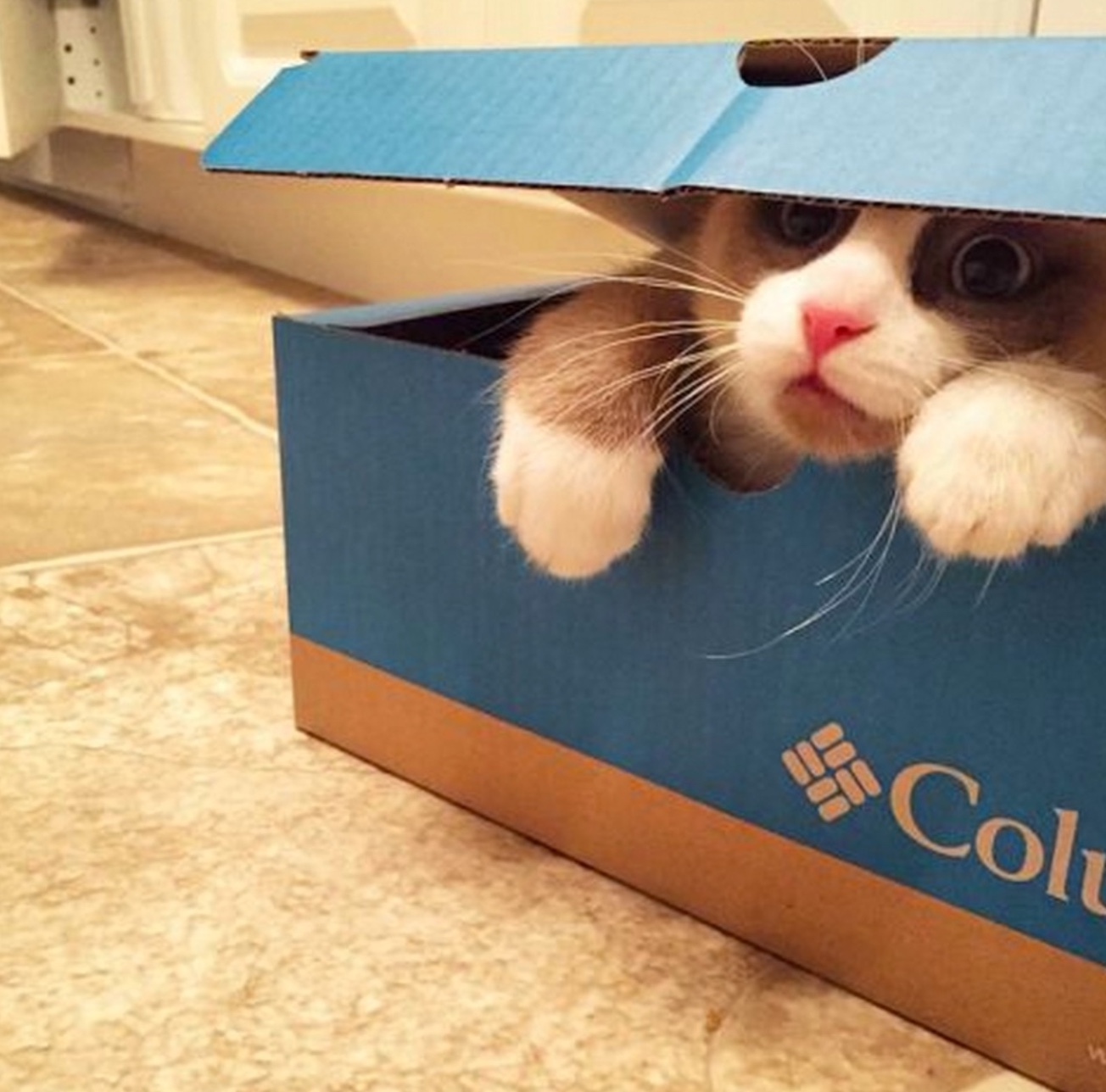 box did eat me