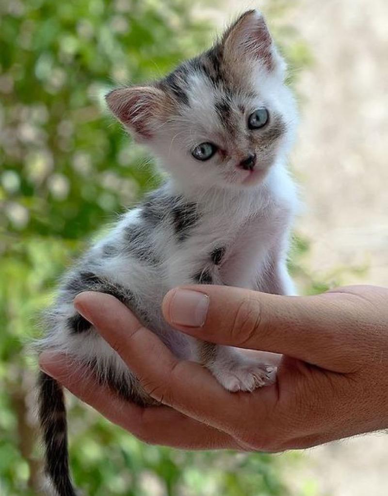 cute in hand