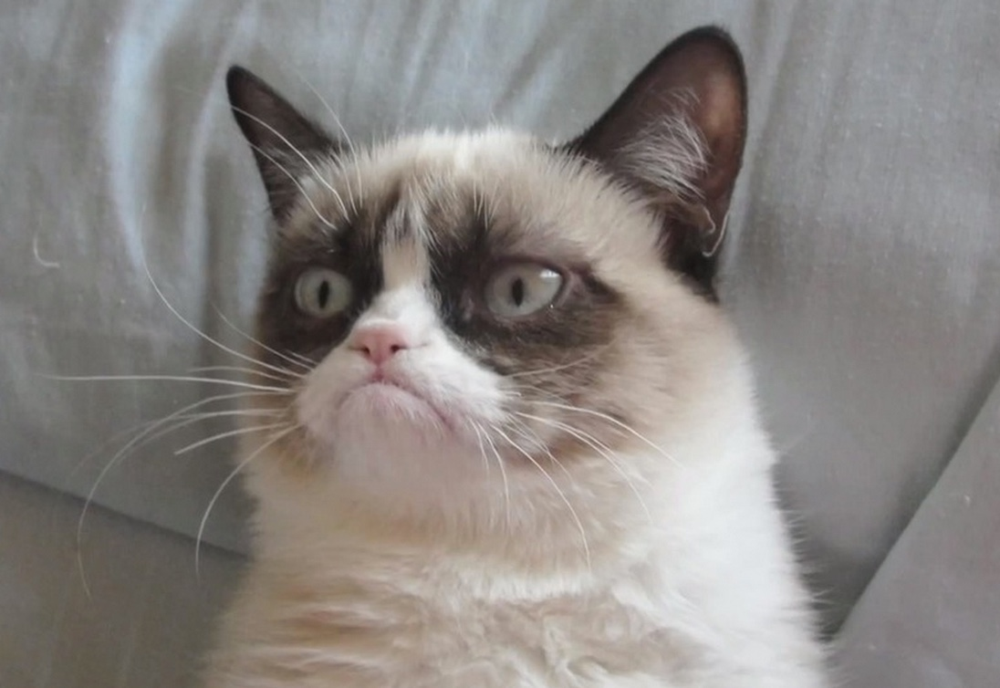 """Grumpy Cat"" is an Internet celebrity known for her grumpy facial expression"
