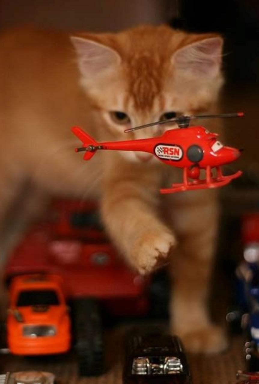 kittykong 1