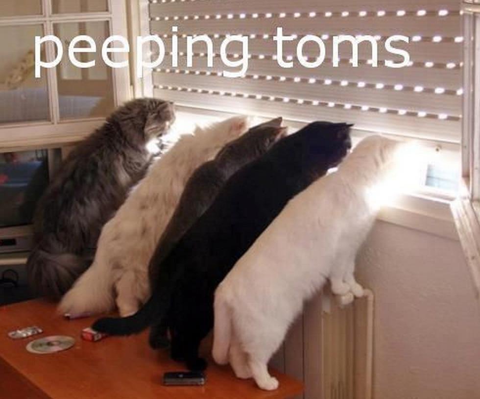 peeping toms
