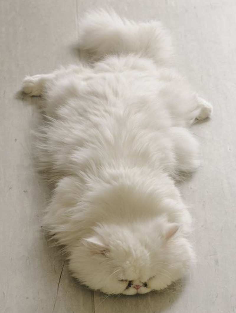 sleep here