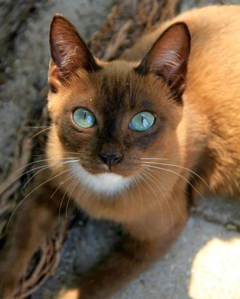amazing eyes copy 2
