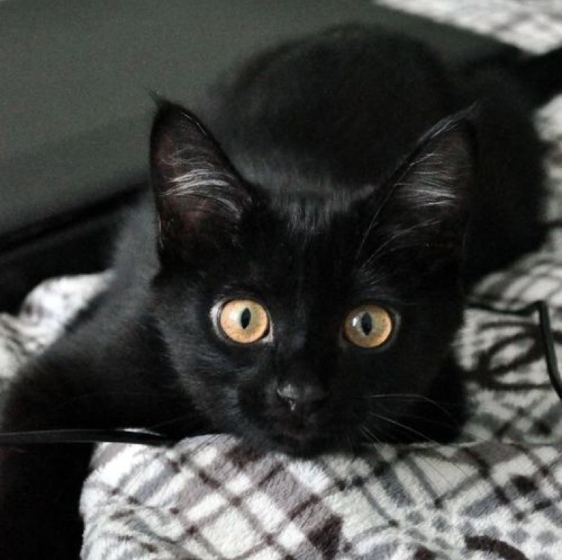 awesome black cat