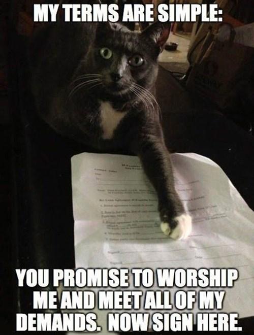 cat terms