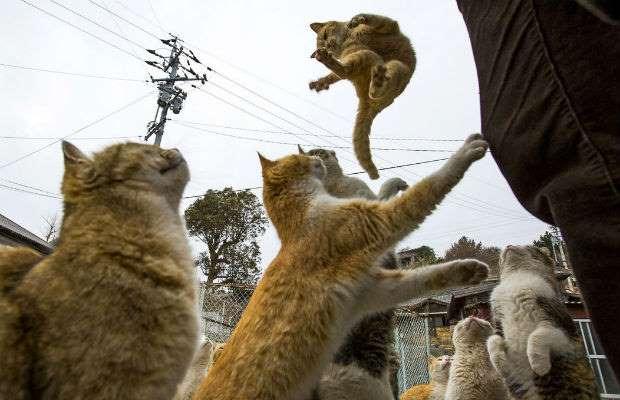 flying caption cat