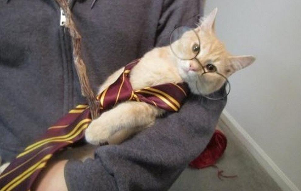 harry catter