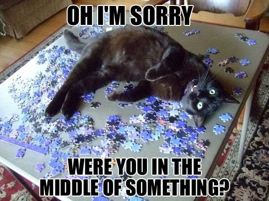 sorry cat jigsaw