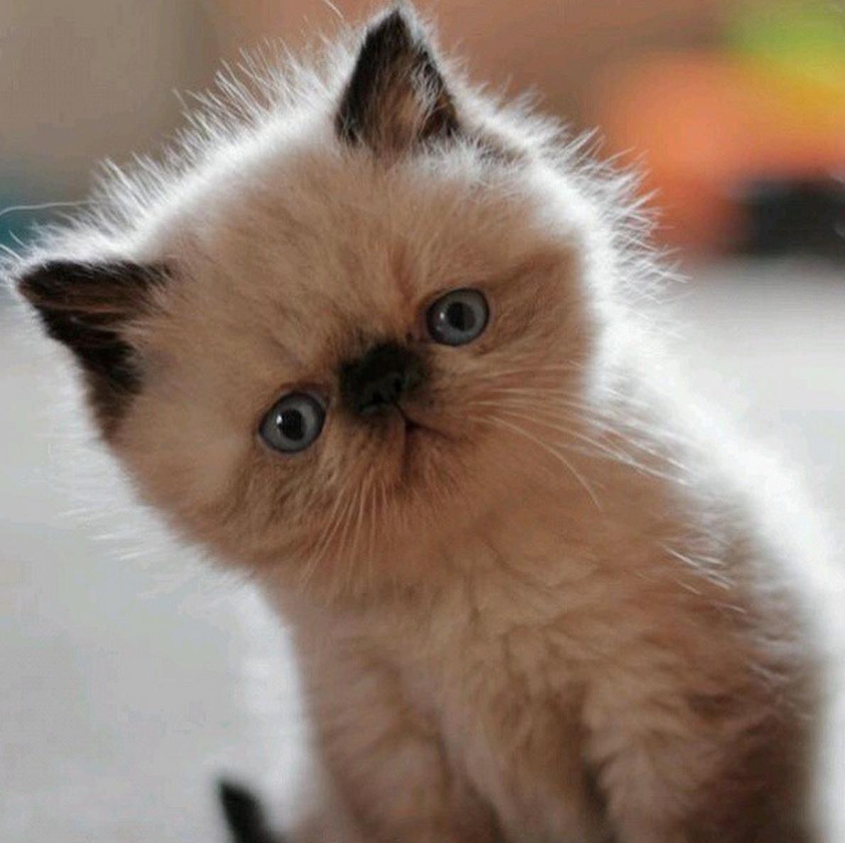 I iz cute !!