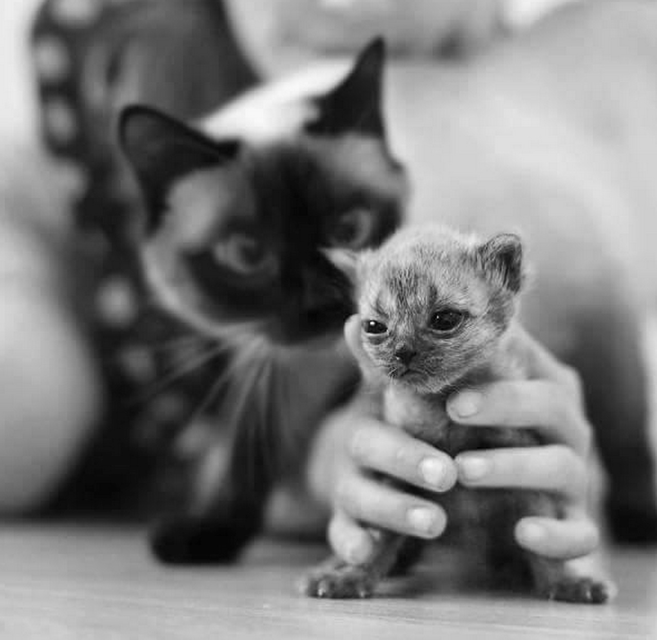 black and white pic