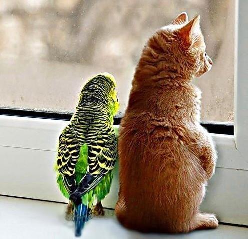 budgie window