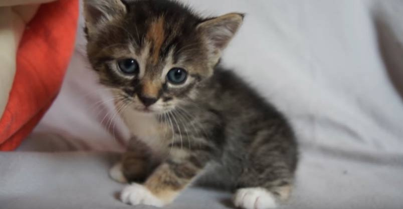 How To Tell If Baby Kittens Are Male or Female