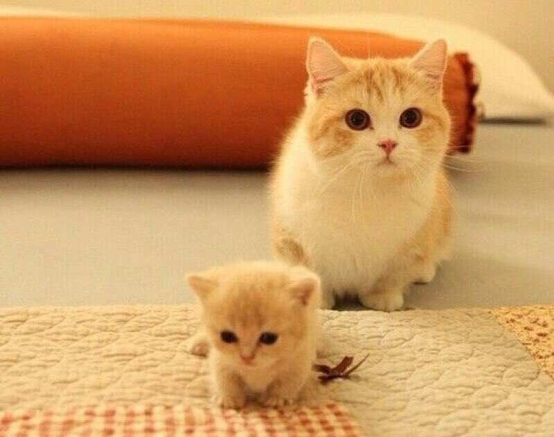 cute mum and kitten
