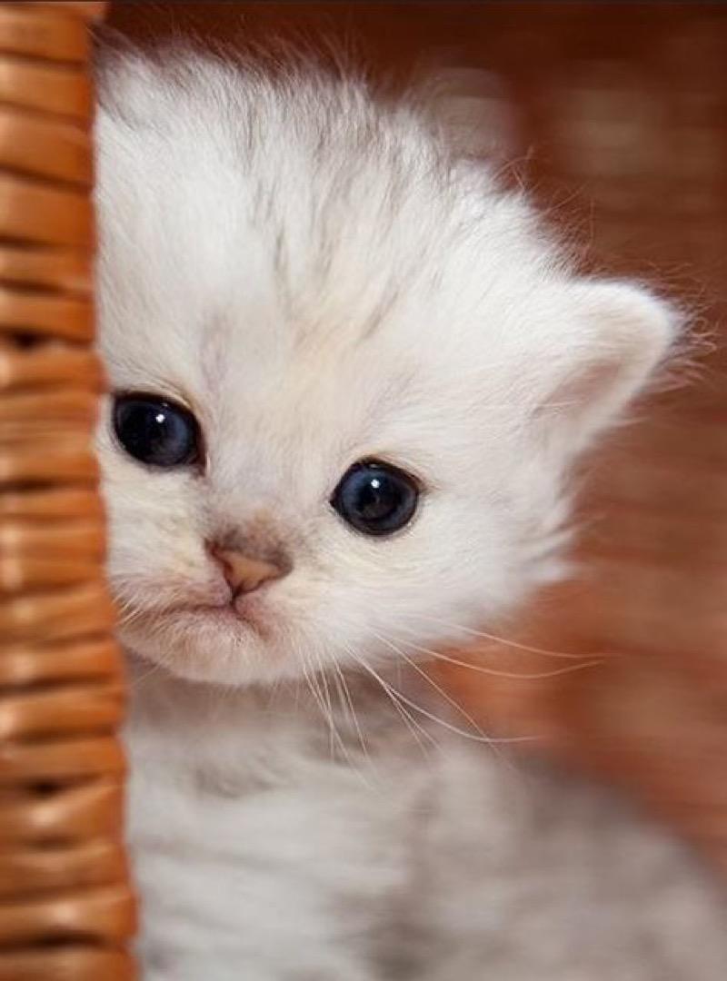 cute white