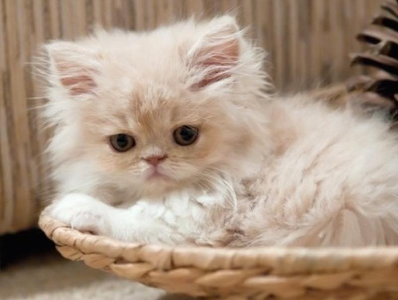 cutie in basket
