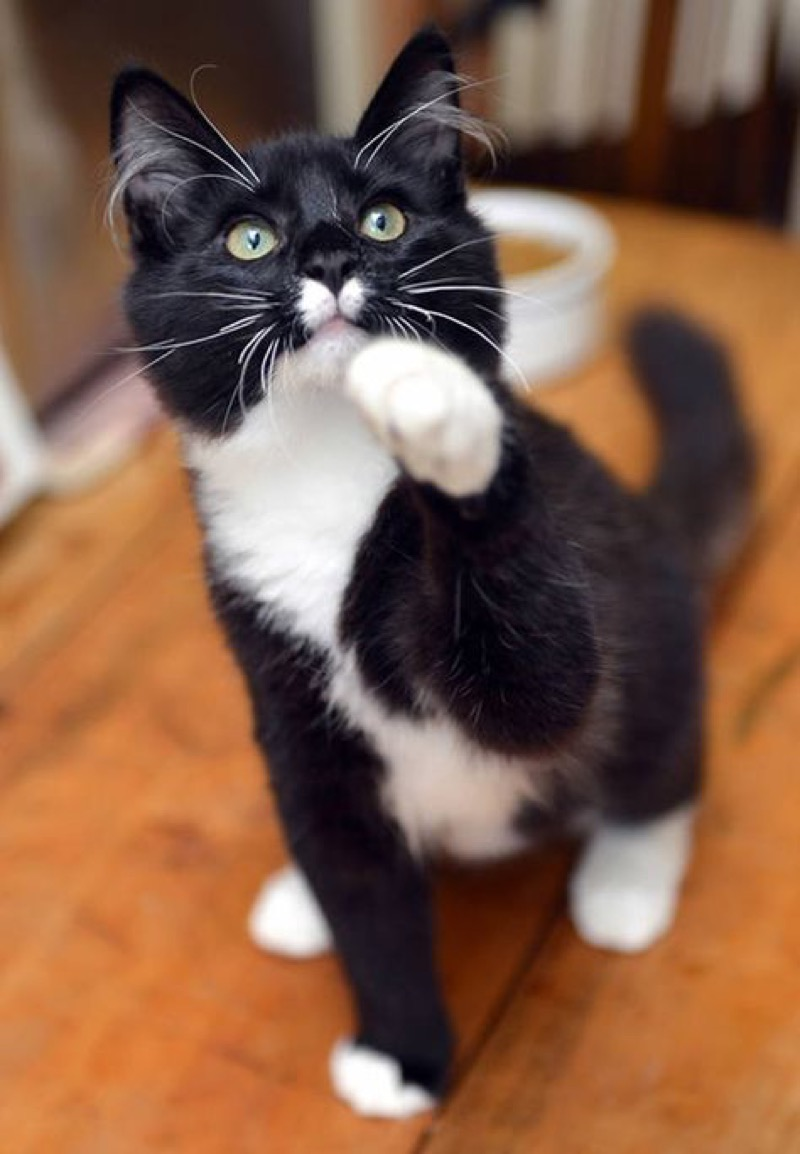 paw up