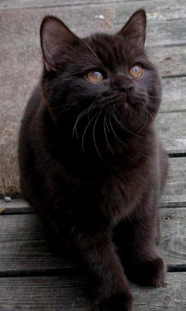 Black cats rule copy