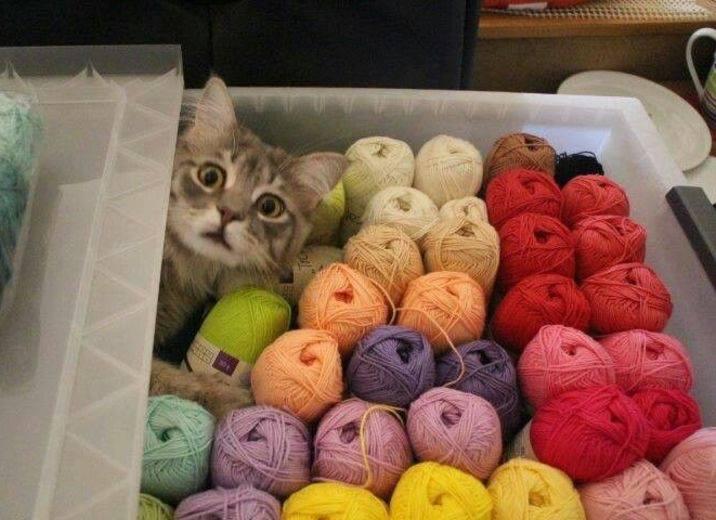 knitting copy