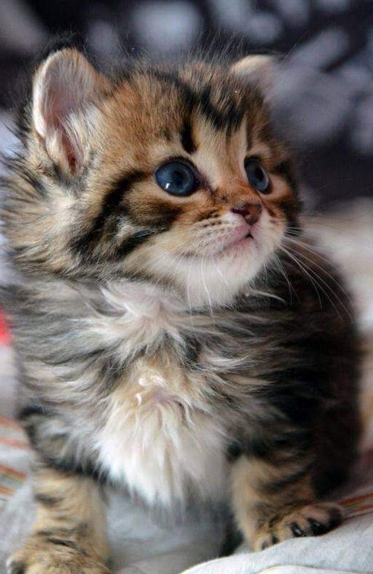 likes cutie