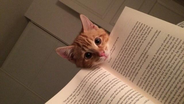 reading 15