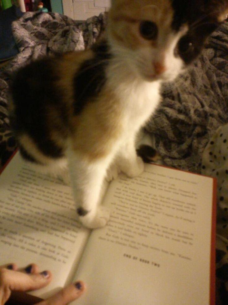 reading 8