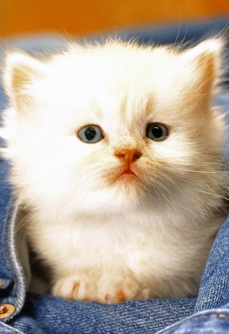 white cuteness