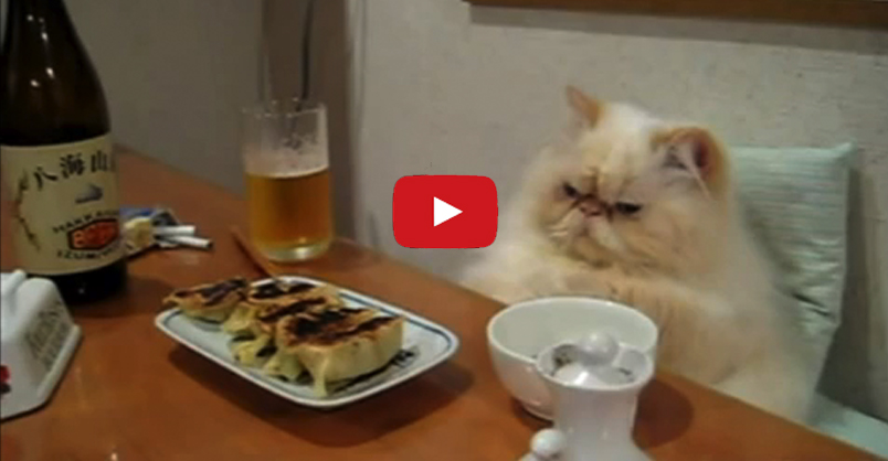 Cats Acting Like Humans We Love Cats And Kittens
