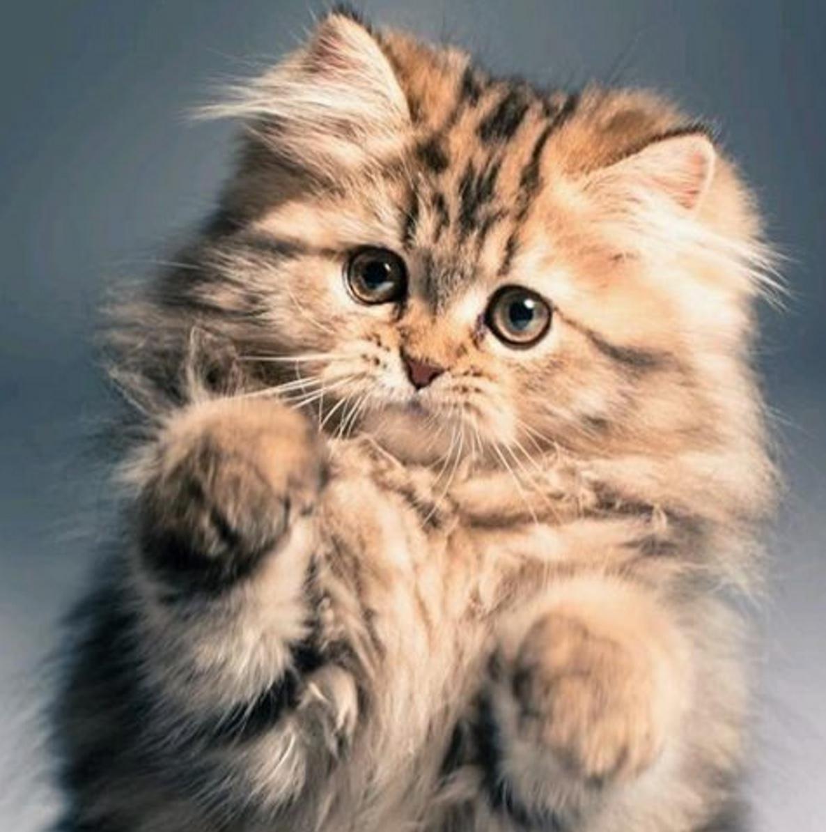 paw fight