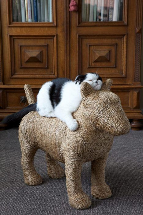 BEST cat scratching post ever!