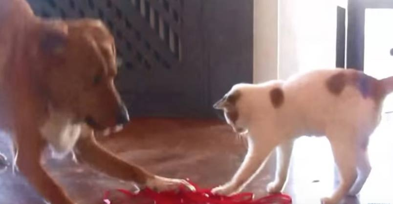 Cat And Dog Go For Walk Every Morning