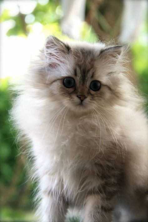 cute and fluffy