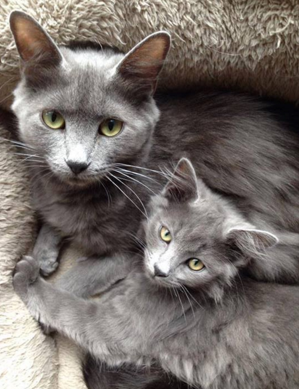 grey beauties