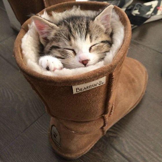 kitten sleeping boot